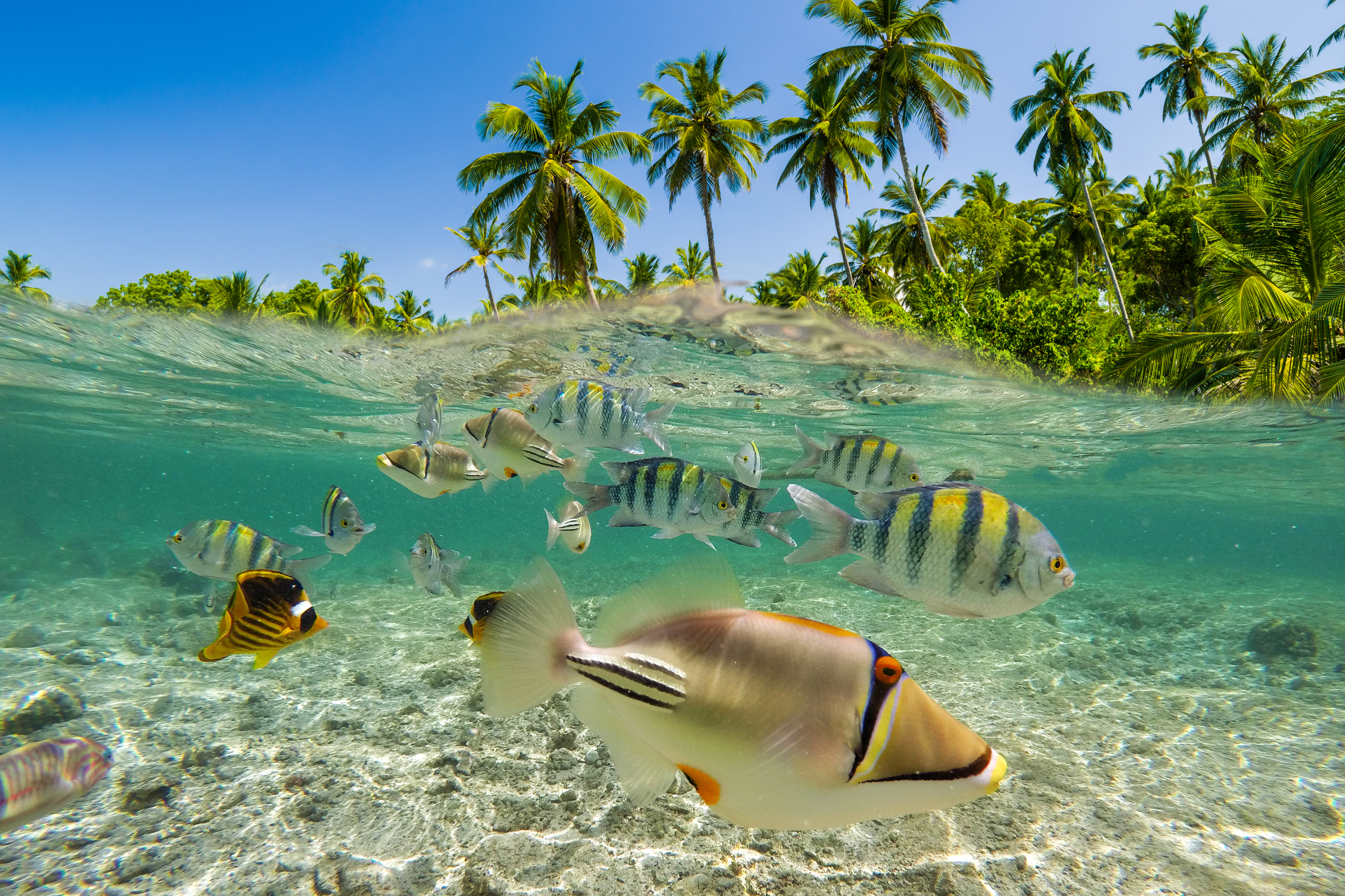 What do to in Fiji